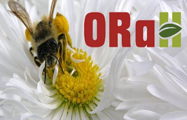 orah_logo